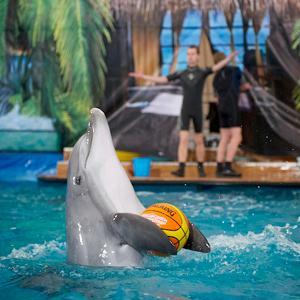 Дельфинарии, океанариумы Первомайского
