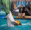 Дельфинарии, океанариумы в Первомайском