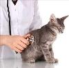 Ветеринарные клиники в Первомайском